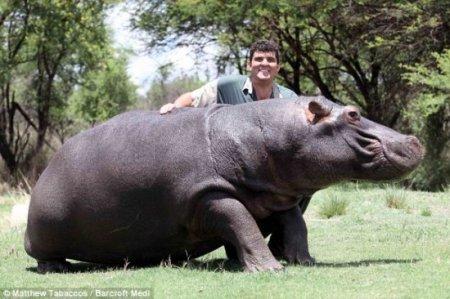 Лучшие друзья: опаснейшее животное Африки и человек