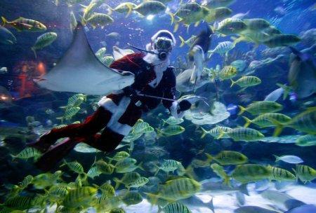 Новый год в подводном мире