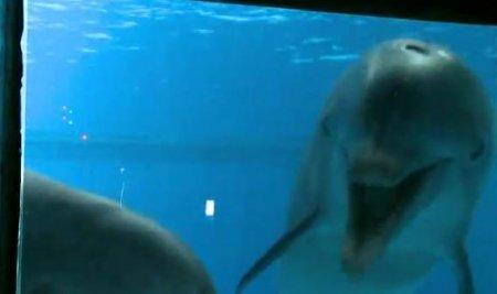 Дельфины видят свое отражение в зеркале