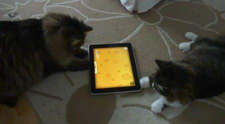 Современные коты