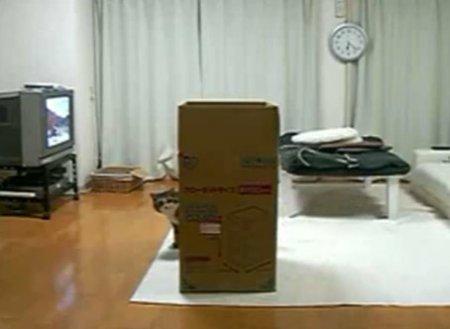 Кот Мару и большая коробка