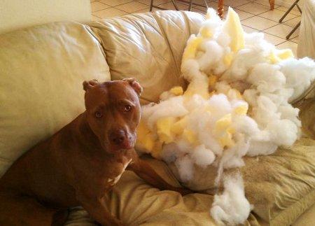 Примерный пес