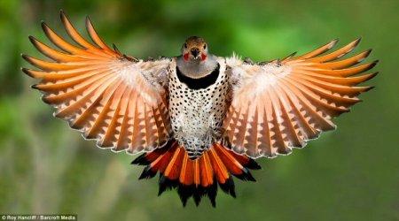 Рой Ханклифф - фотограф-любитель дикой природы