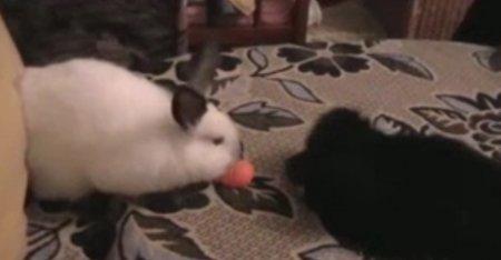 Кролики против собак