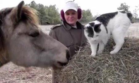 Знакомство пони с кошкой