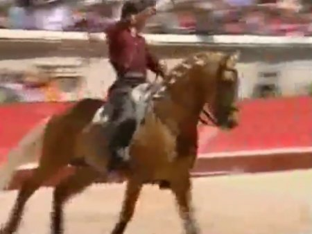 Лошадь-тореодор
