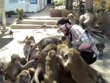 Голодные макаки