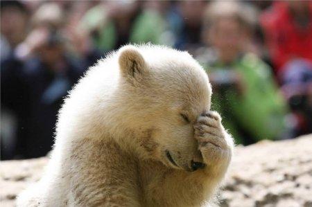 Лучшие зоопарки мира по версии Forbes (2011)