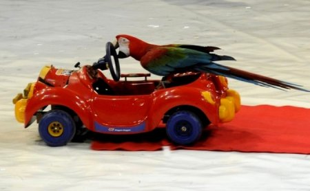 Очень смышленый попугай