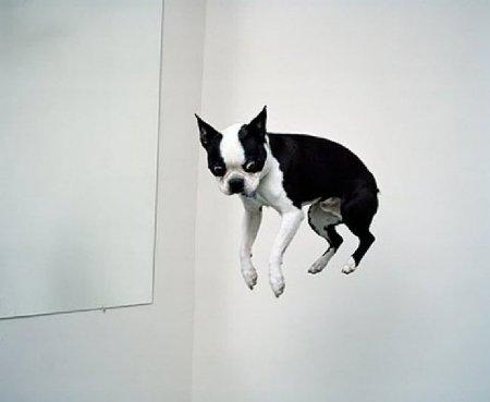 Забавные собаки и щенки