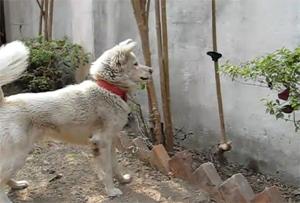 Собака против бабочки