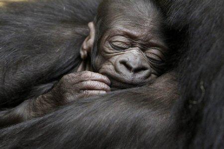 Подборка снимков животных за неделю