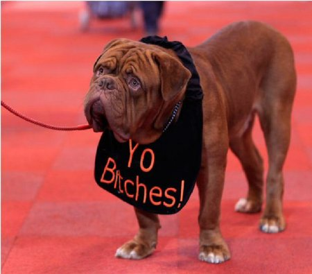 Самая большая выставка собак в Британии - Крафтс 2011