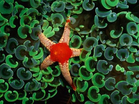 Узоры природы: морские звезды