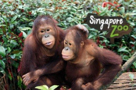 Список лучших зоопарков мира по версии «Forbes»