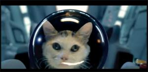 Кота отправили в космос