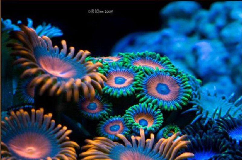 Красивые кораллы 35 фото