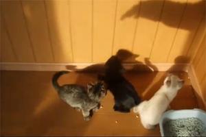 Котята и тени