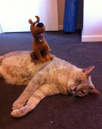 Очень спокойные коты