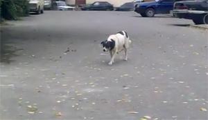 Собака-партизанка