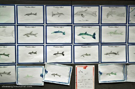 Дельфины в Парке развлечений Сяркянниеми