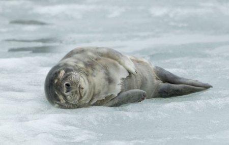 Утро городского тюленя