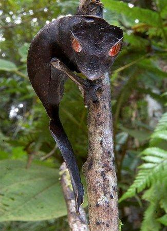 20 самых необычных животных согласно ПБО