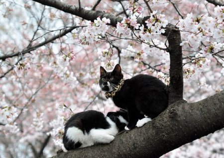 Кошки на деревьях