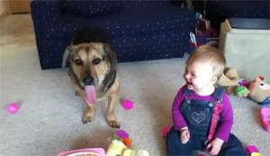 Мыльные пузыри и собака
