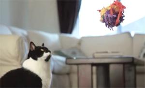 Кот и петушок