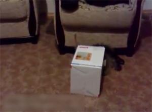 Прыжки в коробку