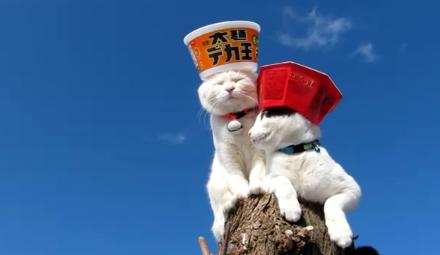 Невозмутимые коты