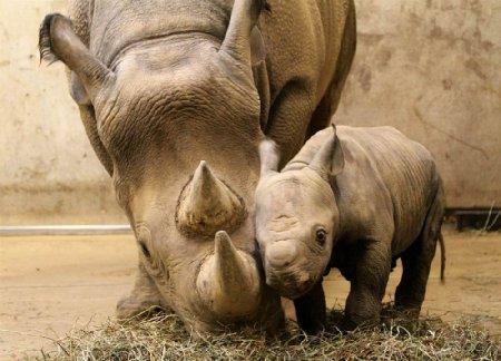 Животные со своими малышами