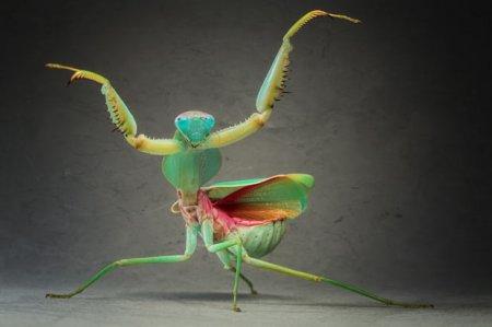 Богомолы и жуки от Игоря Зивановича