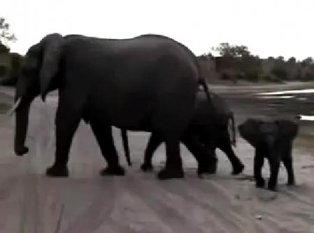 Как чихают слоны