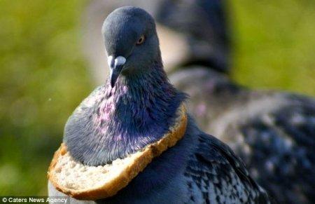 Украшение для голубей