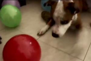 Подарок псу на день рождения