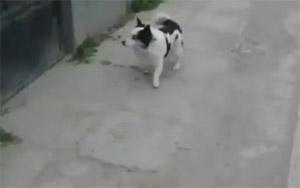 Собака-залезака