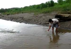 Экстремальное кормление крокодила