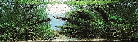 Самые красивые аквариумы в мире