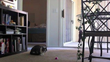 Кот и музыкальная мышка