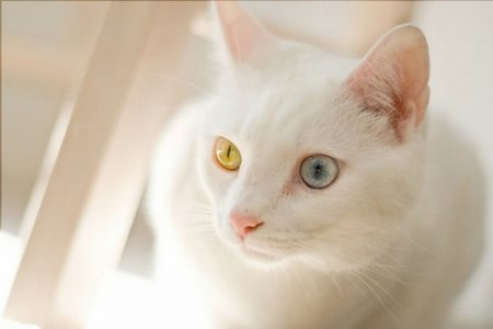 Необычные кошки