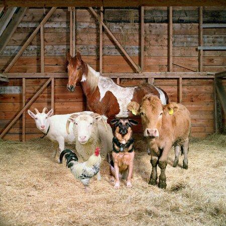 Домашние животные от Роб Макиннис