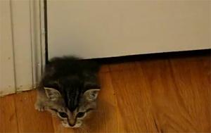 Юркий котенок