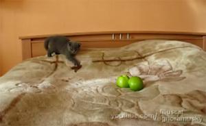 Борьба котят