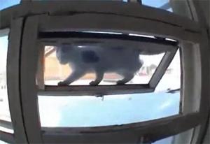 Кот-акробат