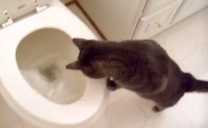 Любитель туалетов