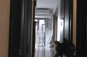 Кот Мару пытается попасть в комнату