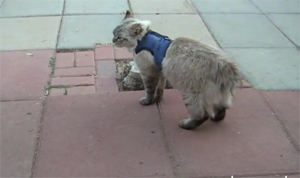 Котэ атакует собаку