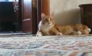 Кот стреманулся